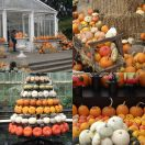 2013-10-09<br/> <b>Pumpins, squashes and gourds at Kew</b>