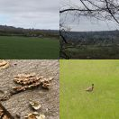 2014-04-05<br/> <b>Oxted Downs</b>