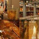 2014-07-01<br/> <b>Natural History Museum Tank Room</b>