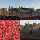 2014-11-09<br/> <b>Poppies at the Tower of London</b>